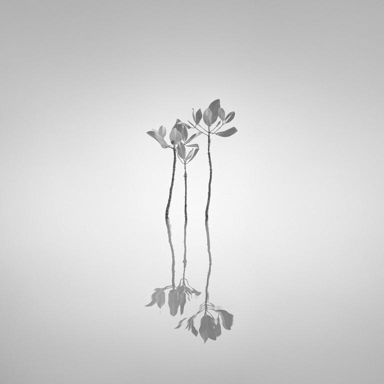 Koentjoro_Hengki_Mangroves02