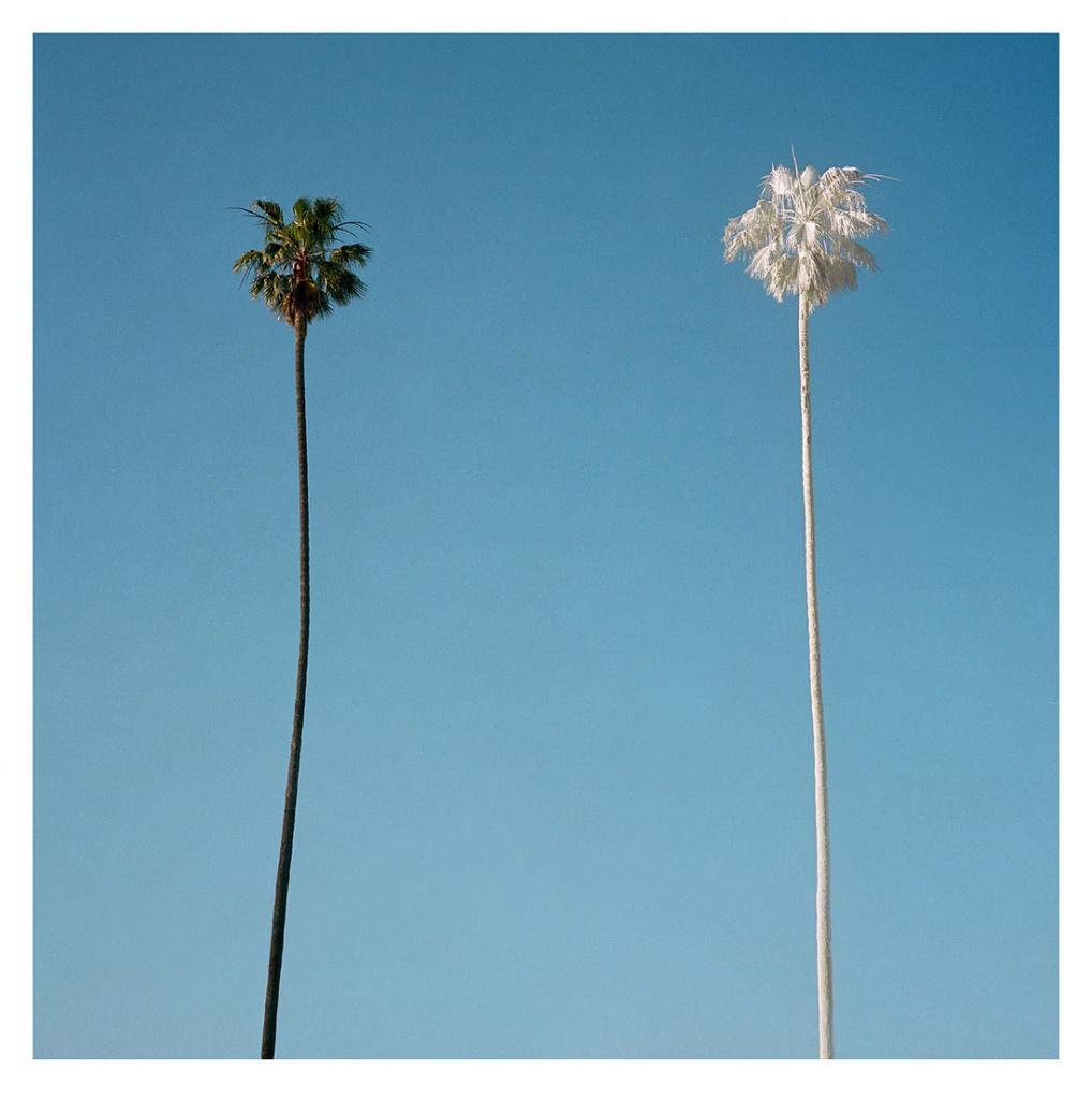 White Palm, Los Angeles