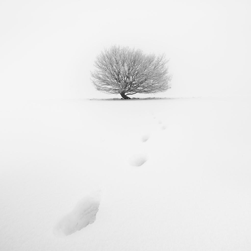 Frozen Loner