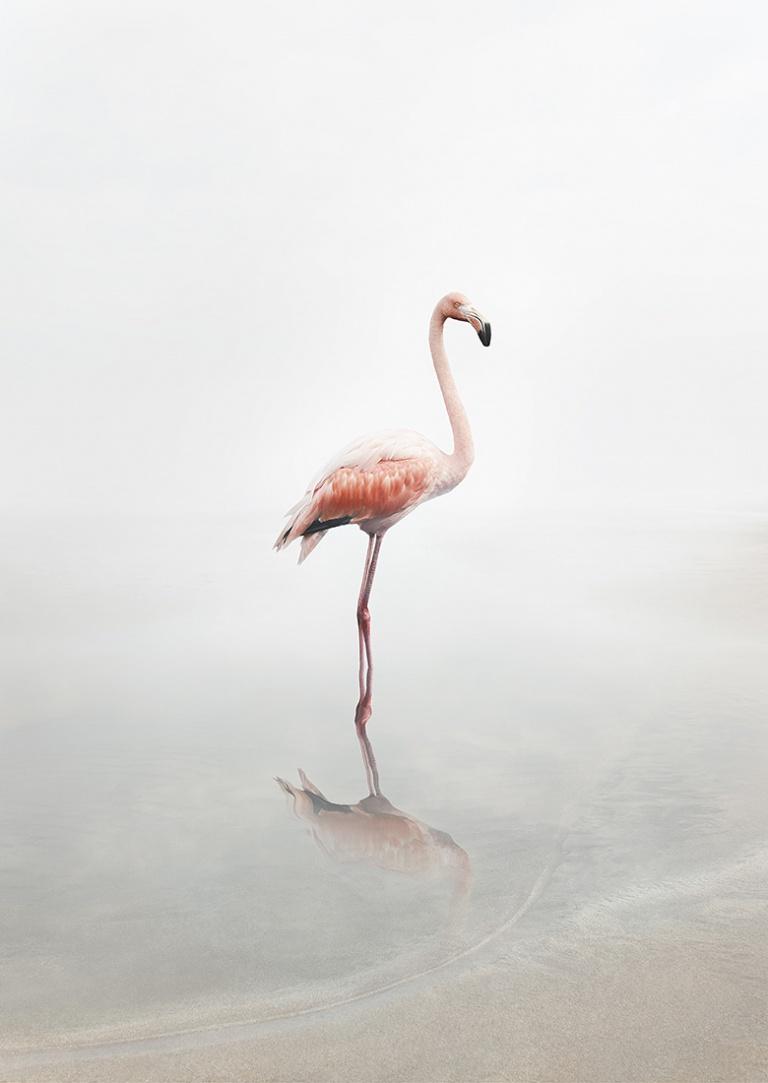 For Now Flamingo
