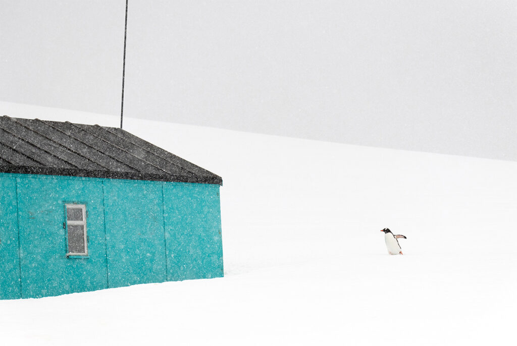 A penguin and a house
