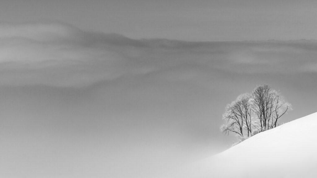 Island in the sea of fog