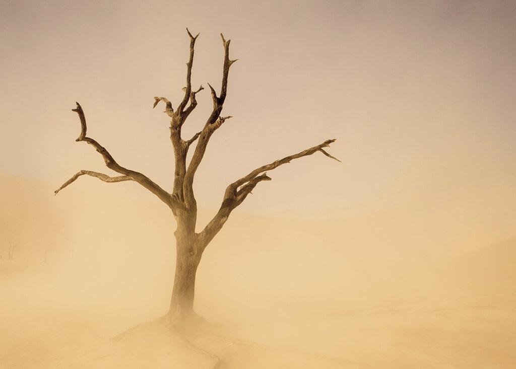 Sossusvlei Sandstorm