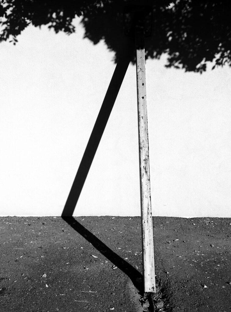 Tree Imagined