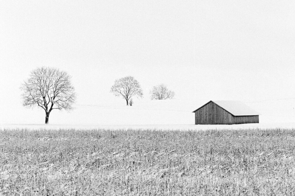 Winter Trees and Hut