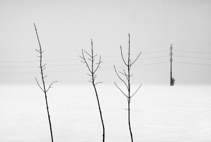 Baciu_Andrei_WinterlyHaiku04