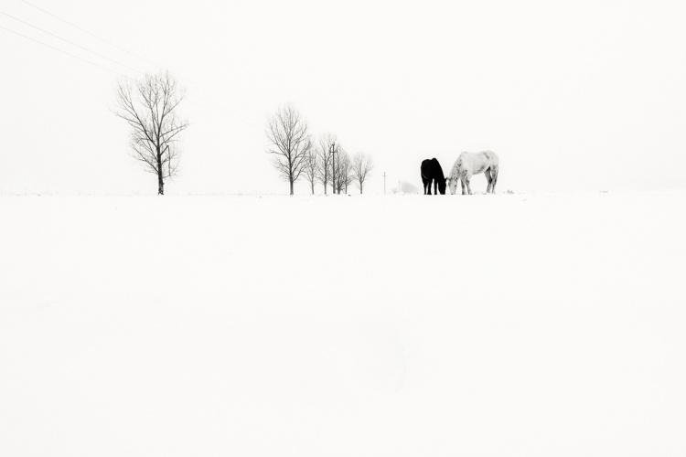 Baciu_Andrei_WinterlyHaiku05