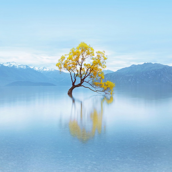 Chong_Diane_LonelyHappyTree01