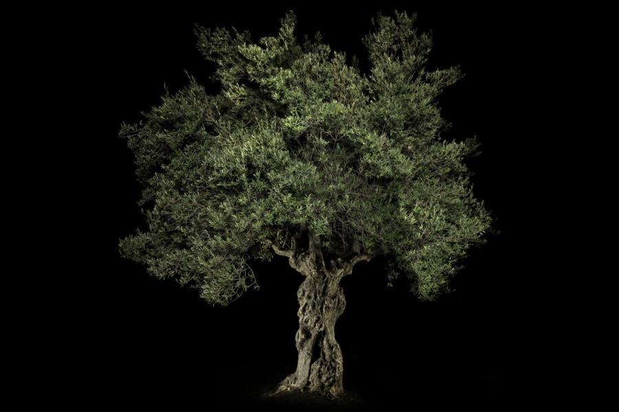 Desgraupes_Patrick_Portraits-of-Trees.01