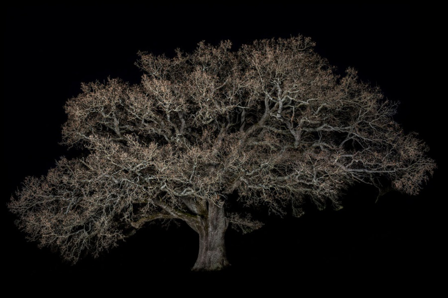Desgraupes_Patrick_Portraits-of-Trees.03