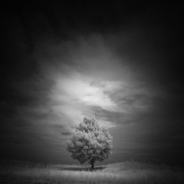 Edwards-Ave-tree