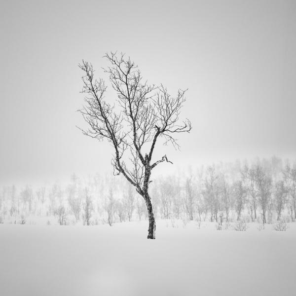 Marc_Koegel_Frozen_2