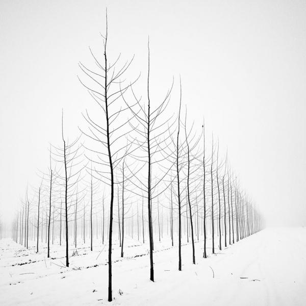 Pierre_Pellegrini_Nature_in_3D